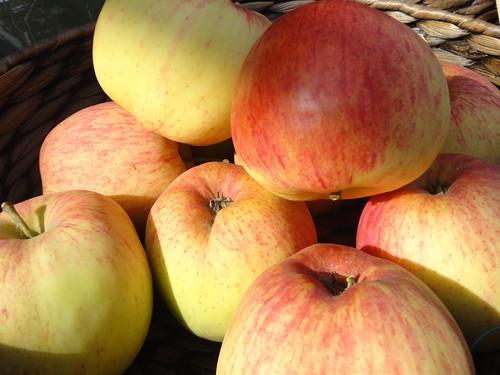 Яблони для подмосковья сорта