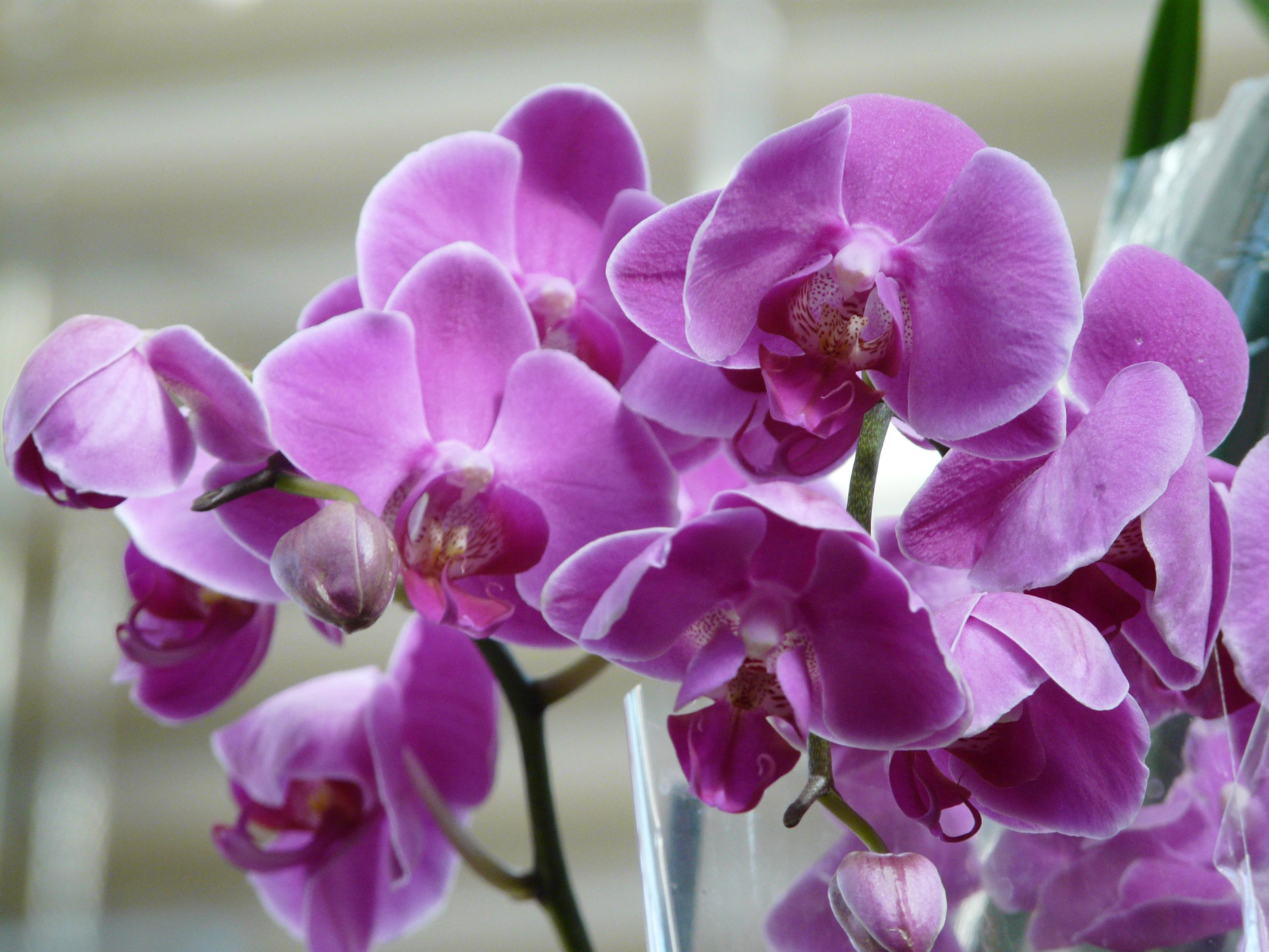 Картинки по запросу орхидея