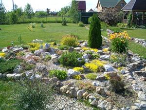 Неприхотливые растения для каменистых садов и рокариев